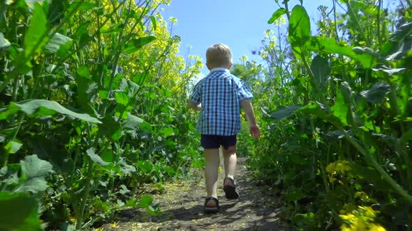 Thumbnail for Little Boy Running Slowly in Yellow Flowers