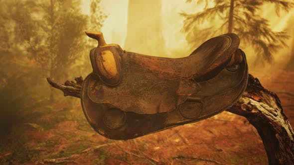 Thumbnail for Vintage Leather Horse Saddle on the Dead Tree in Forest at Sunset