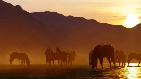 Thumbnail for Herd of Wild Horses Watering in the Mountainous Area at Sunset
