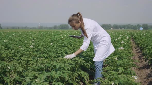 Thumbnail for Agronomist working outdoors