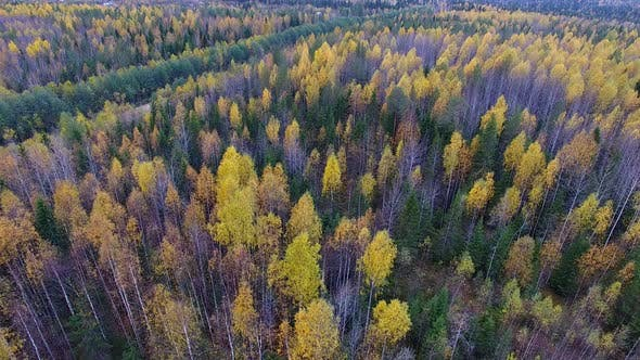 Thumbnail for Yellow And Green Forest In Autumn