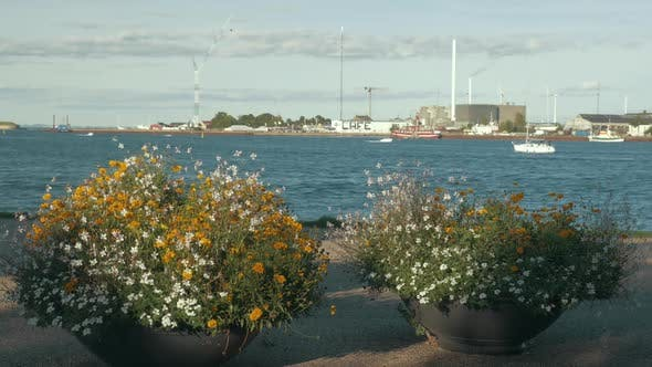Thumbnail for City Harbour, View From Waterfront