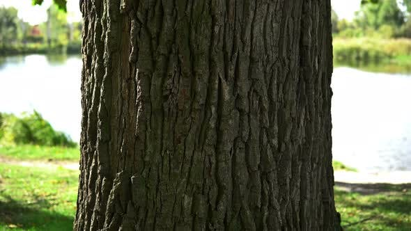 Thumbnail for Hitting On A Horizontal Panoramic Scene Of Oak Bark 2.