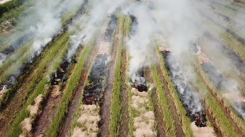 Top view smoke emission from open fire in rice field