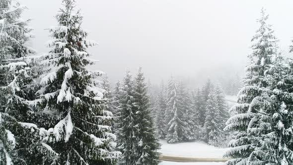 Thumbnail for Winter Carpathian, Fly Over Fir Tree in the Snowstorm