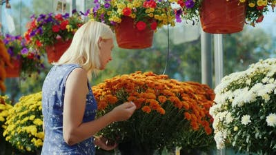 The Buyer Chooses Flowers in the Nursery