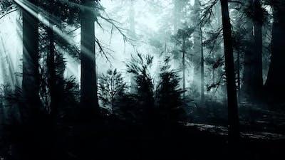 Black Tree Trunk in a Dark Pine Tree Forest