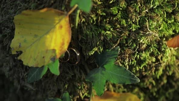 Thumbnail for Trauringe in Mosa und Blätter auf einer Baumrinde. Schmuck bei der Hochzeit