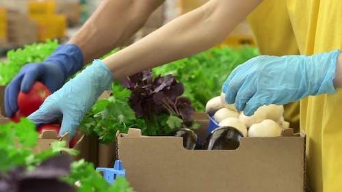 Mann und Frau arbeiten mit Bio-Lebensmitteln und Verpackungen in Agro Company Indoors Spbd