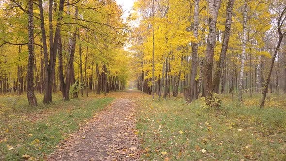 Thumbnail for Autumn Alley In The Park Mazurino