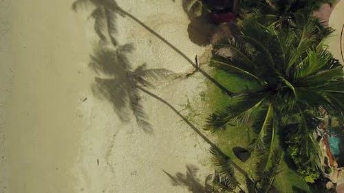 Luftaufnahme von Palmen an einem tropischen Strand, Ko Chang, Thailand.