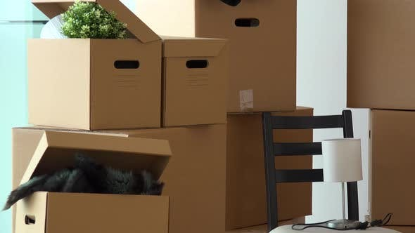 Thumbnail for Cardboard Boxes and Chair in the Interior of an Apartment - Closeup