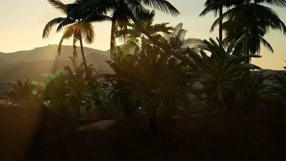 Thumbnail for Coco Palm Trees Tropical Landscape