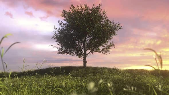 Thumbnail for Green Apple Tree Full Of Red Apples In Meadow
