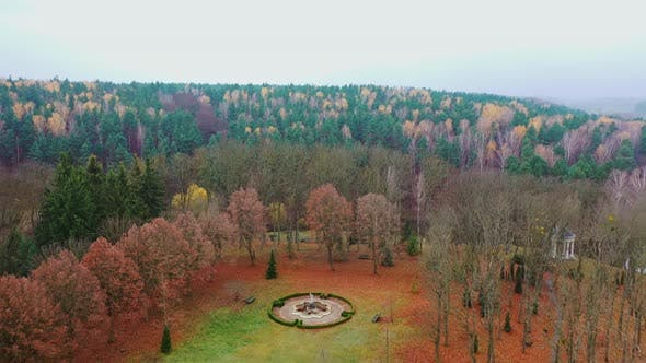 Thumbnail for Aerial view of forest tree. Aerial shot of beauty forest nature landscape