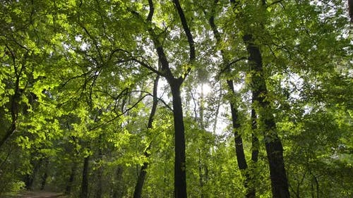 Sonniger Tag im Wald im Oktober