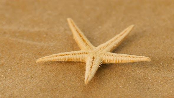 Cover Image for White, Starfish, Sea, Rotation, Closeup