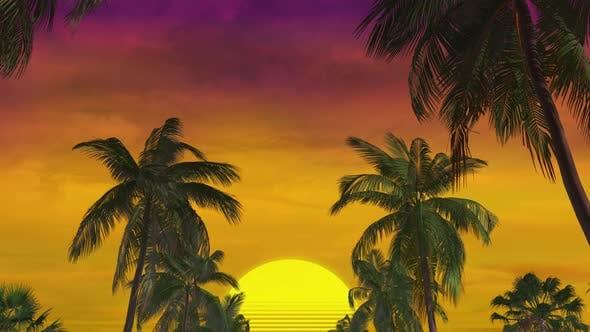 Sommerpalme Sonnenuntergang 02 4k