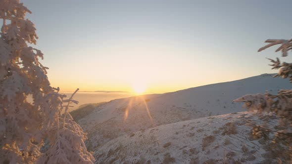Thumbnail for Sunset Trough Frozen Evergreen Trees and Snow Covered Mountains in Bulgaria