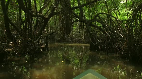 Thumbnail for Boat Ride Thru The Mangroves River