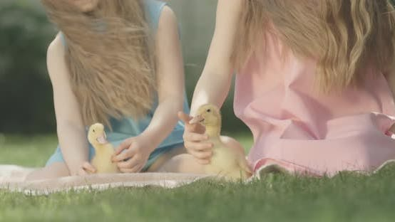 Thumbnail for Unrecognizable Children Caressing Ducks on Sunny Summer Day Outdoors. Brunette Curly-haired