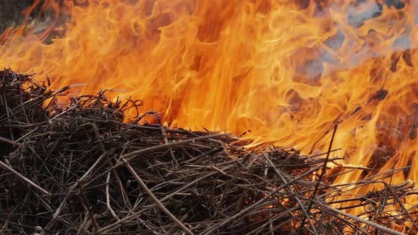 Dry grass burns in a bright flame in the forest