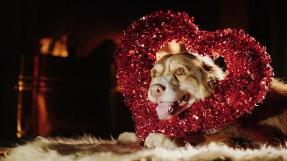 Thumbnail for Cute Dog in a Red Heart Ornament for Valentine's Day