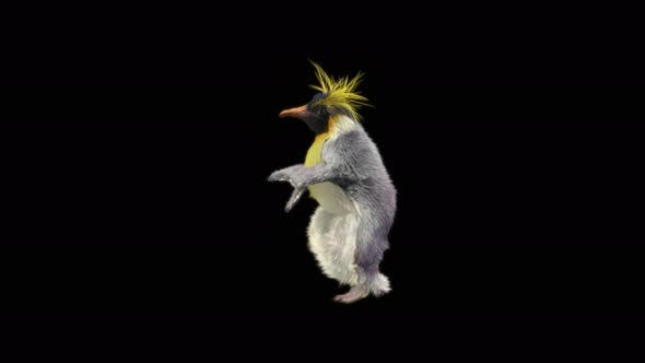 Penguin Dancing 4K