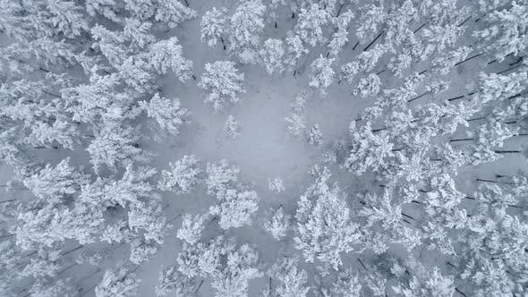 Thumbnail for Descending Top View Shot of the Snowy Forest in Winter