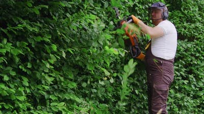 Man Shaping Bushes with Electric Trimmer at Garden