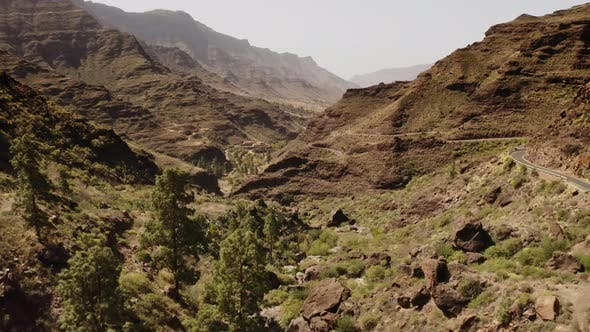 Thumbnail for Canary Island Valley with Pine Trees