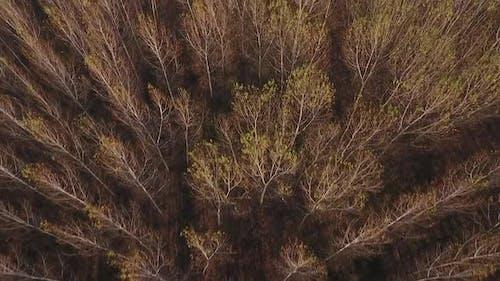 Flying Over Woodland