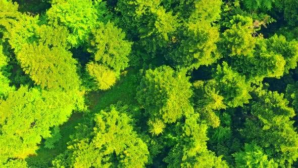 Drone Flies Above Deciduous Forest
