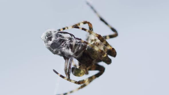 Cover Image for Spider On A Web