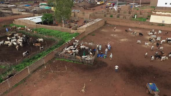 Thumbnail for Africa Mali Village And Ox Aerial View 6