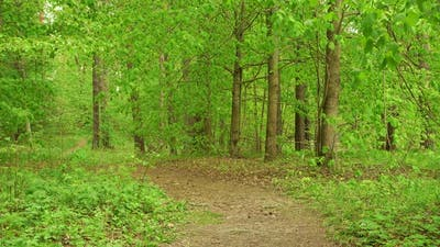 Country Road Via Beautiful Green Woods