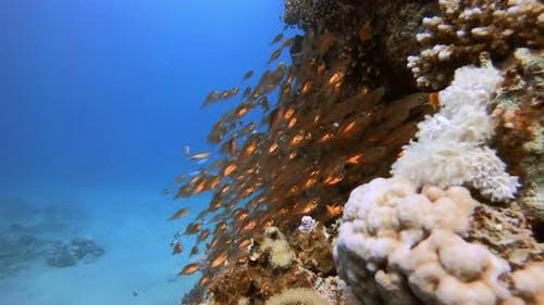 Fish Hunting Glass-Fish