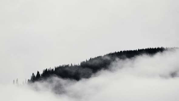 Thumbnail for Misty Forest in Mountain. Marvelous View of Over Pine Forest in the Morning. Magical Fog All the Way