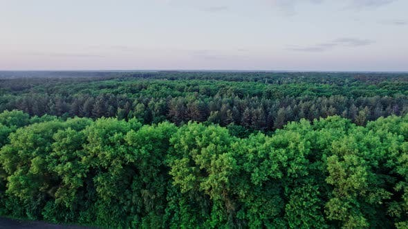 Flight Over Woods Natural Background