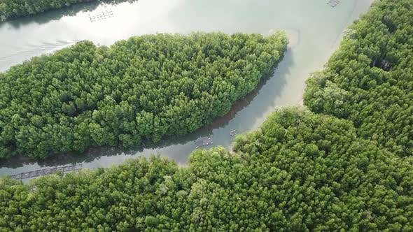 Thumbnail for Aerial of River in Mangrove Forest in Thailand