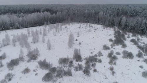 paisaje de invierno enestado Bosque, campo. Horizontal de invierno.