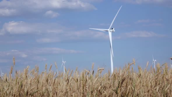 Thumbnail for Modern Wind Turbines Generating Green Energy, Against the Background of Young Ripening Wheat