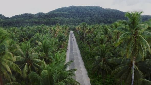 jungle area in the philippines, aerial view