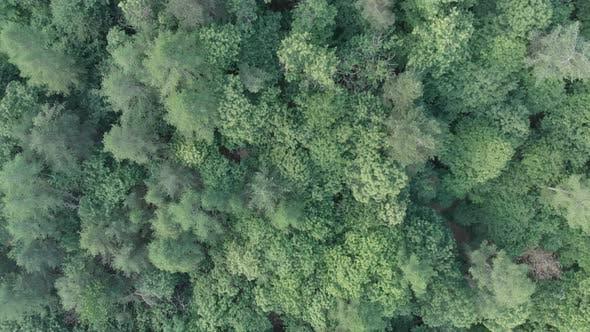 Luftaufnahme: Fliegen direkt über smaragdgrünen Waldwäldern