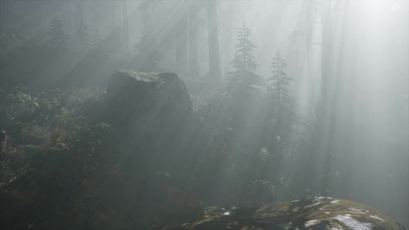 Cover Image for Coniferous Forest Backlit By the Fising Sun on a Misty