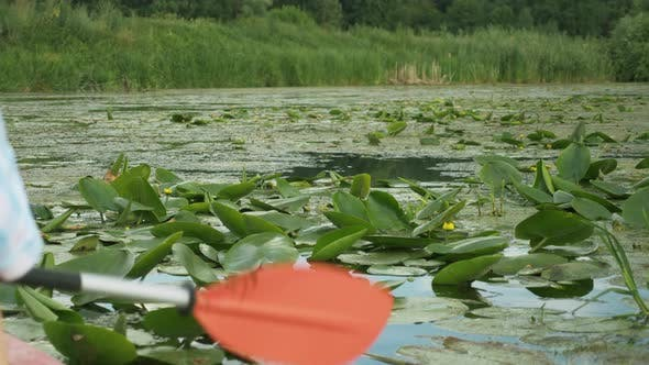 Thumbnail for Calm beautiful river with lotus flowers, close up. Kayak oar is paddling in tranquil water on lake.