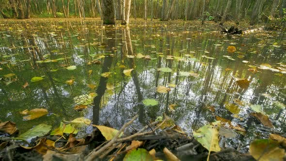 Thumbnail for Trees Among the Water in Mysterious Mirror Pond, Beaver Backwater