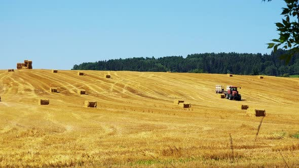 Thumbnail for Farmers Harvest Grain From the Field (Farmer Loads Haystacks on the Tractor) - Sunny Day