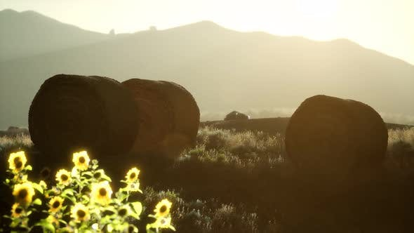 Thumbnail for Hay Bales in the Sunset