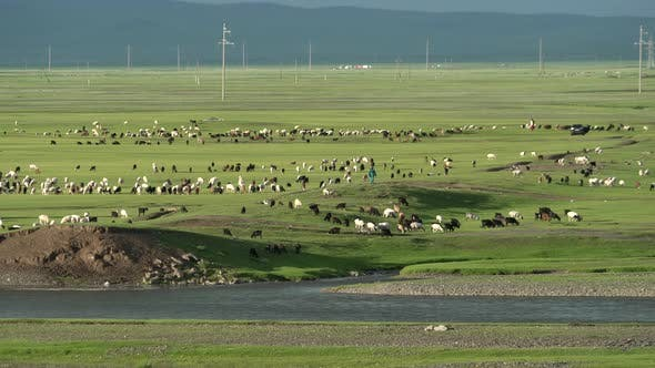 Thumbnail for Herds of Animals in the Mongolian Grasslands